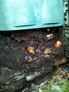 Compost in maturazione alla base del composter