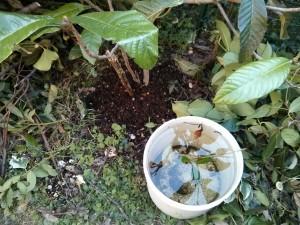 Compost sotto un arbusto in crescita