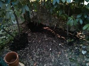 Compost alla base di arbusti di siepe da recinzione