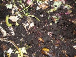 Lombrichi e massa in decomposizione