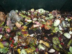 Materiali freschi immessi nel composter